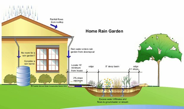 Home Rain Garden Illustration